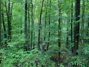 Mountain Creek Ski Rental | Forest Nature