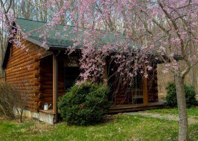 White Tail Cabin Spring