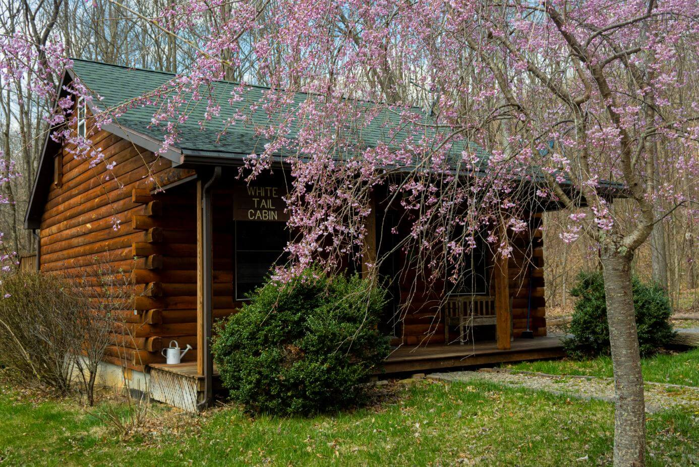 Cabin Rentals in West Virginia | White Tail Cabin Rental
